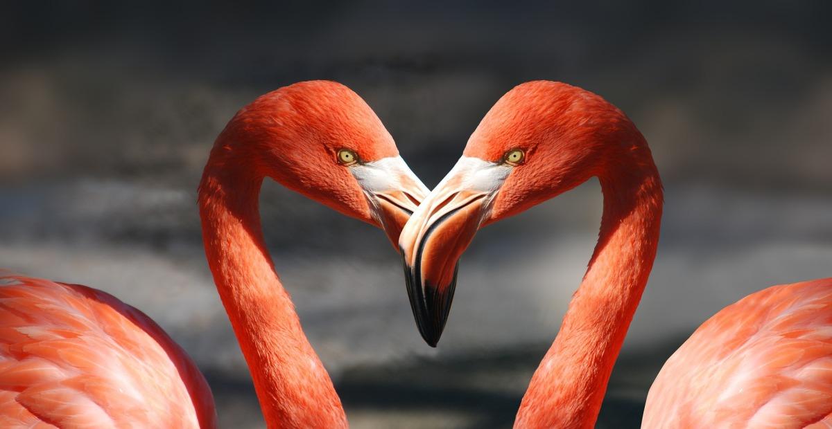 7 privalumai būti meiluže